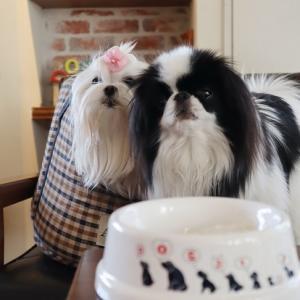 お誕生日記念のドッグデプトカフェ