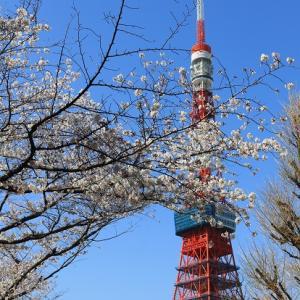 ❤ 桜・ワンコ・東京タワー