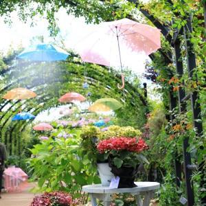 アジサイと雨傘❤イングリッシュガーデン