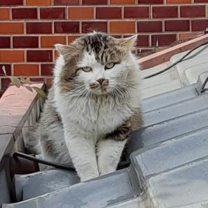 この猫だれ?