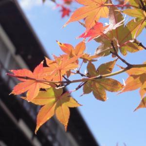 いろんなものを抱え込む「秋」という季節と、「普通の生き方」に隠されたハードル