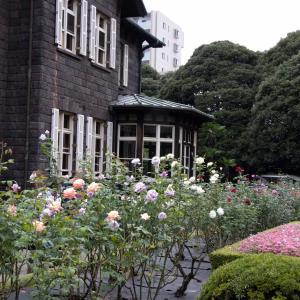 旧古河庭園の秋バラを見に