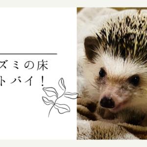 【決定版】ハリネズミの床材ベストバイ!