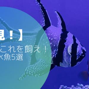 【必見!】初心者はこれを飼え!お勧め海水魚5選
