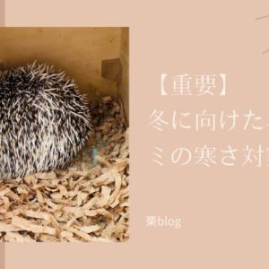 【重要】冬に向けたハリネズミの寒さ対策