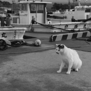 漁港の猫、漁船に乗る