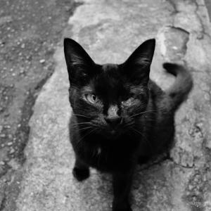 ポートレイト(路地裏の黒猫)