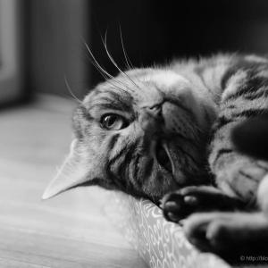 昼寝から目覚めた猫