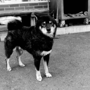 犬についての思い出