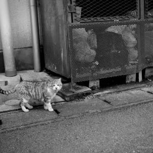 やさぐれ猫の処世術