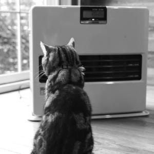 猫〜冬の風物詩(室内)
