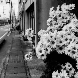 グレーな町にグレーな花が咲く
