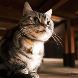 おい、俺の写真も載せろよ、と猫が宣う