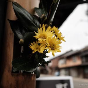虚実入り乱れた街の花