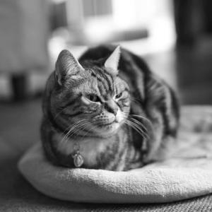 室内で春を待つ猫