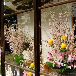 冬に咲く啓翁桜