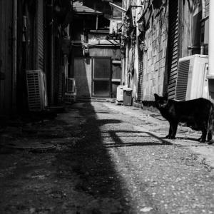 行き止まりの路地裏と猫