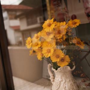 窓辺の黄色い花