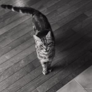 猫の顔力にびびる