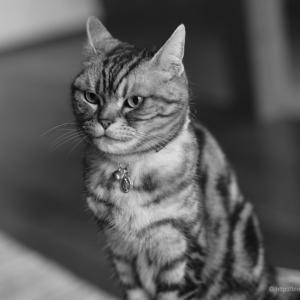 さらばライカMモノクローム〜猫とコサイン誤差
