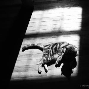 猫と日溜り