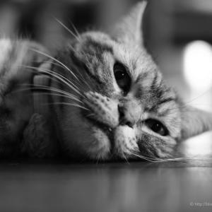 微睡の刻、覚醒の刻