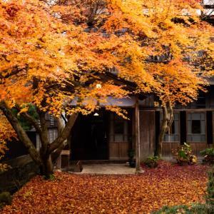 秋の邸宅の奥庭には見事な紅葉が・・・