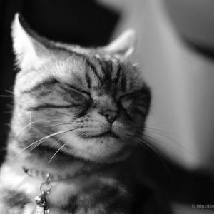 猫、瞑想の刻 + アントニオ猪木のこと