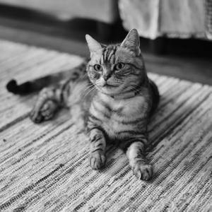 猫様の言う通り + ブログ村参加のお知らせ