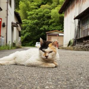ローアングル猫〜道路は猫のもの