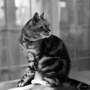 モノクロ習作(終)〜人生において、猫さえ撮れたらそれで良い