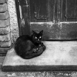 路地裏の黒猫、再び