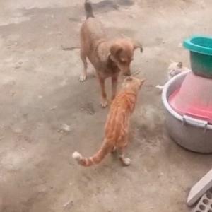 平和を愛するワンコによるネコの喧嘩の仲裁ww