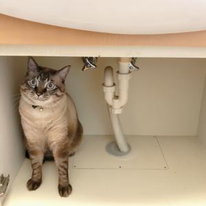 【洗面台下収納をスッキリ!】洗剤の量に愕然