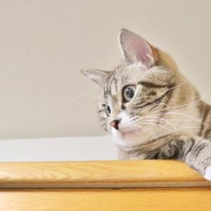長年の夢だった猫を飼うことができたけど想定外の出来事に