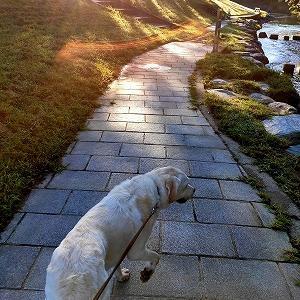 早朝散歩での翁