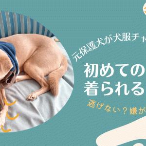 【チャレンジ】犬服着れるかな?(生まれて初めてのお洋服)
