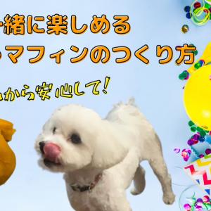 【グルテンフリー】愛犬と一緒に楽しめるかぼちゃマフィンのつくり方