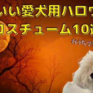 【おうちで愛犬とハロウィン】かわいい愛犬用ハロウィンコスチュームおすすめ10選