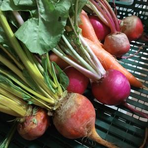 立川カラフル野菜の小山農園