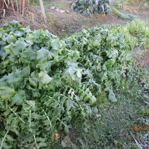家庭菜園VLOG