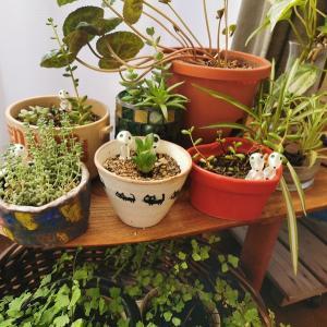 植物に元気をもらう暮らし
