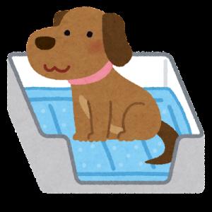 犬 トイレシーツの全面を使い倒す方法