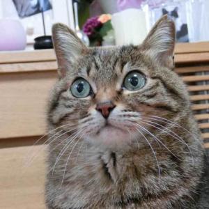 matryoshka cat