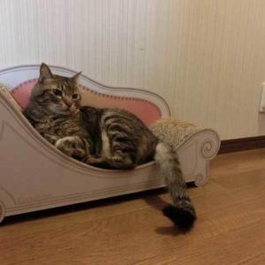 廊下に並ぶ猫ベッド