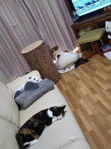 テレビより猫