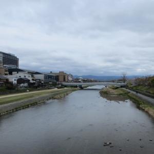 京都高瀬川沿いの桜
