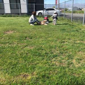 昨日は3回目の芝刈り^^;