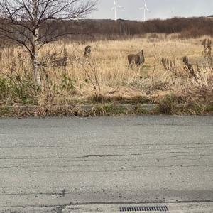 鹿がいっぱい(・・;)