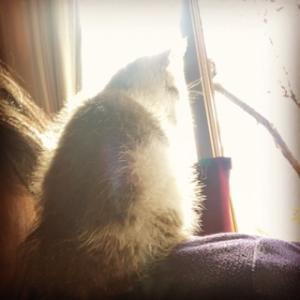肩乗り猫がどうなるか